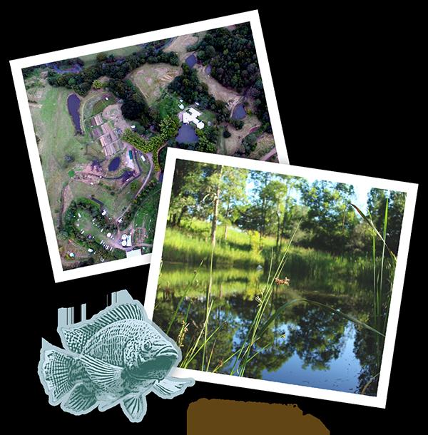 zaytunafarm waterharvesting dams