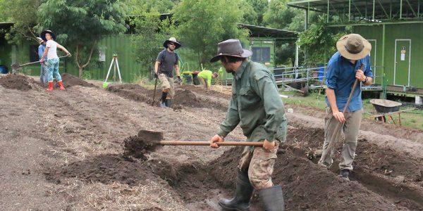 Creating new gardens