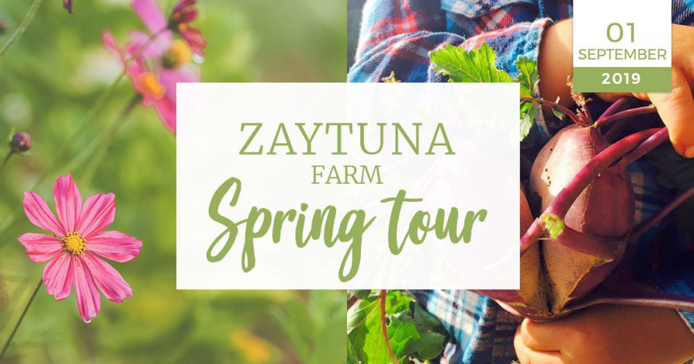 Zaytuna-farm-spring-tour--01-September-2019