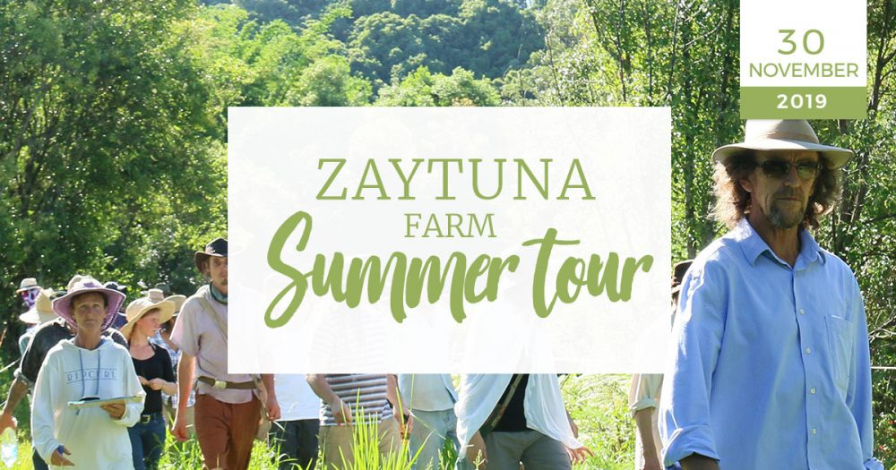Zaytuna-farm-summer-tour-30-nov-2019