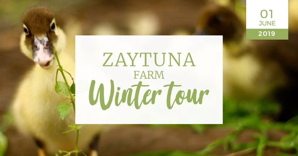Zaytuna-farm-winter-tour-01-JUNE-2019