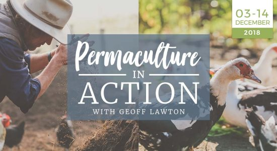 permaculture-in-action-practical-homesteading-off-the-grid-zero-waste-course-practical-training-03-14-december-2018-geoff-lawton