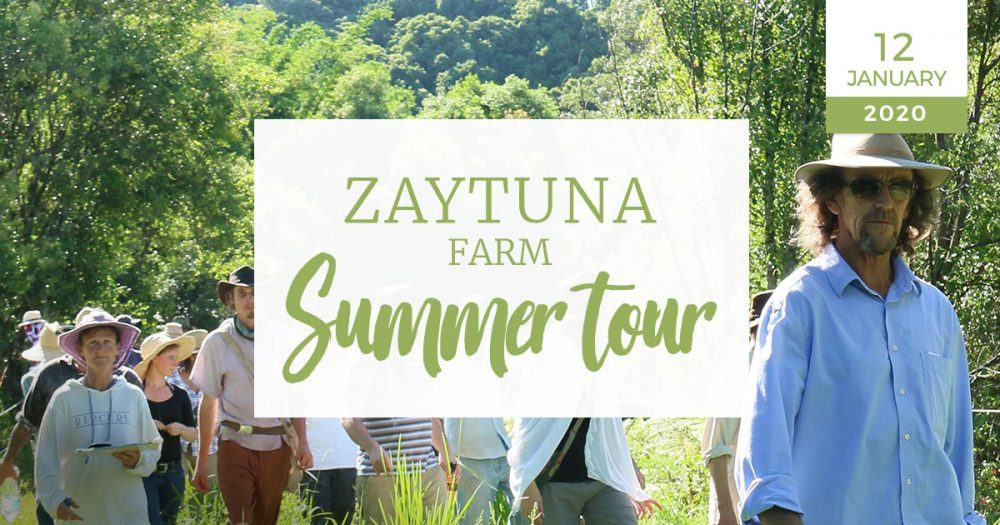 Summer-tour-12-january-permaculture-zaytuna-farm-geoff-lawton-nozf