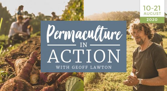 Permaculture-in-action-practical-organic-farming-training-course-geoff-lawtonnzf
