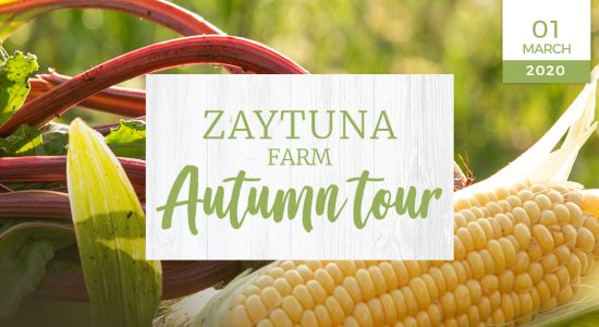 zaytuna-farm-autumn-farm-tour-nzf