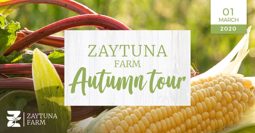 Autumn Tour At Zaytuna farm