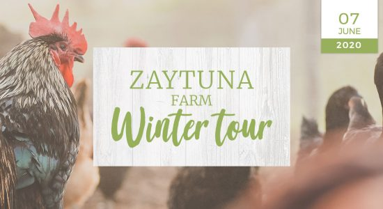 zaytuna-farm-winter-farm-tour-nzf