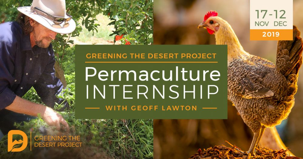 Permaculture-internship-at-Greening-the-desert-project-2019